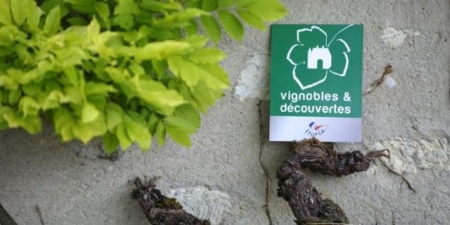 Nouveaux labellisés Vignobles & Découvertes