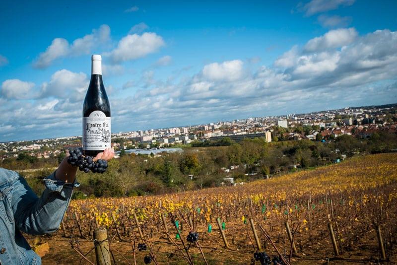 photo Domain de la Vigne au Roy Bourgogne Hautes Cotes de Nuits Les Champs Bon Valot