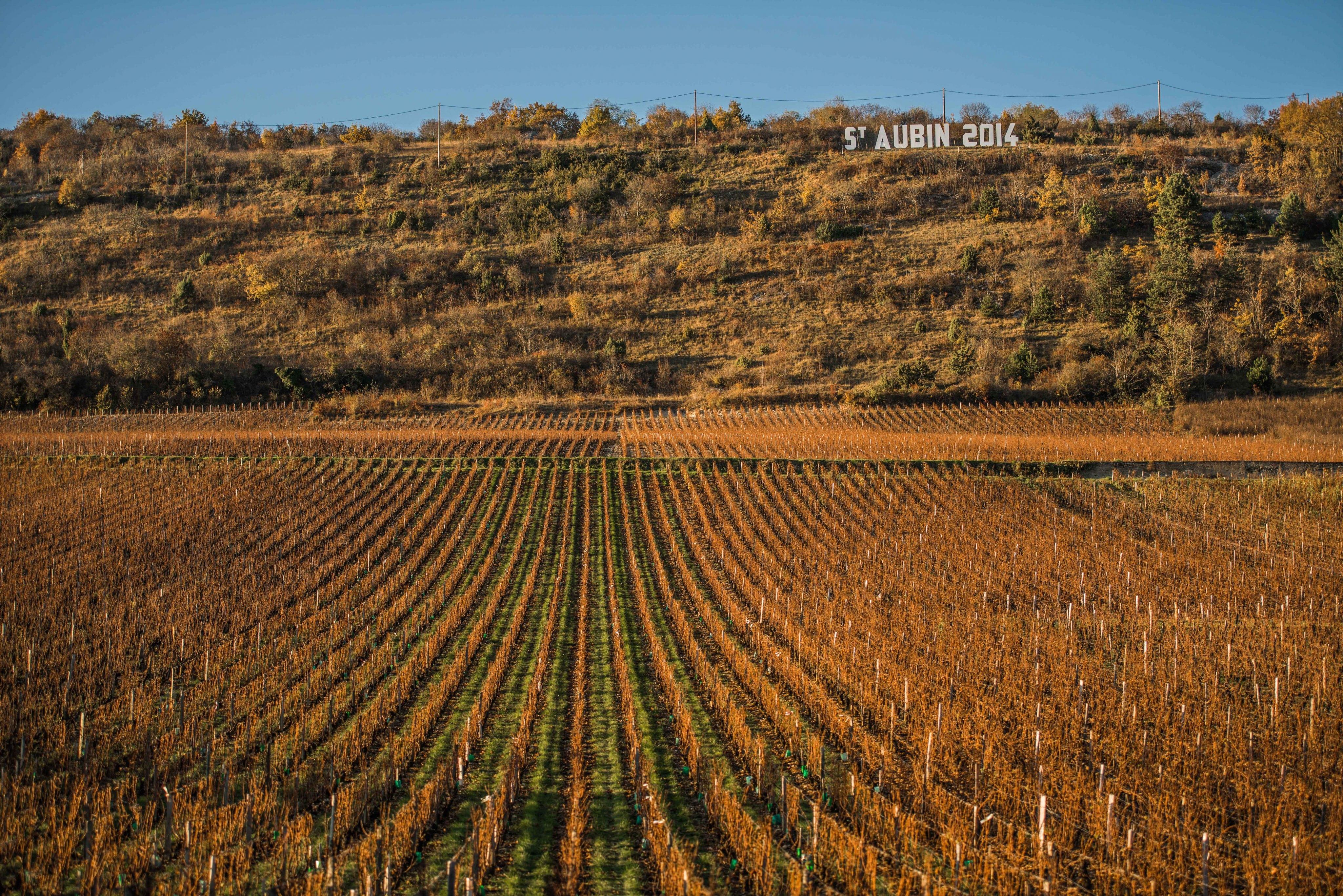 Saint-Aubin, l'un des plus beaux paysages viticoles du monde