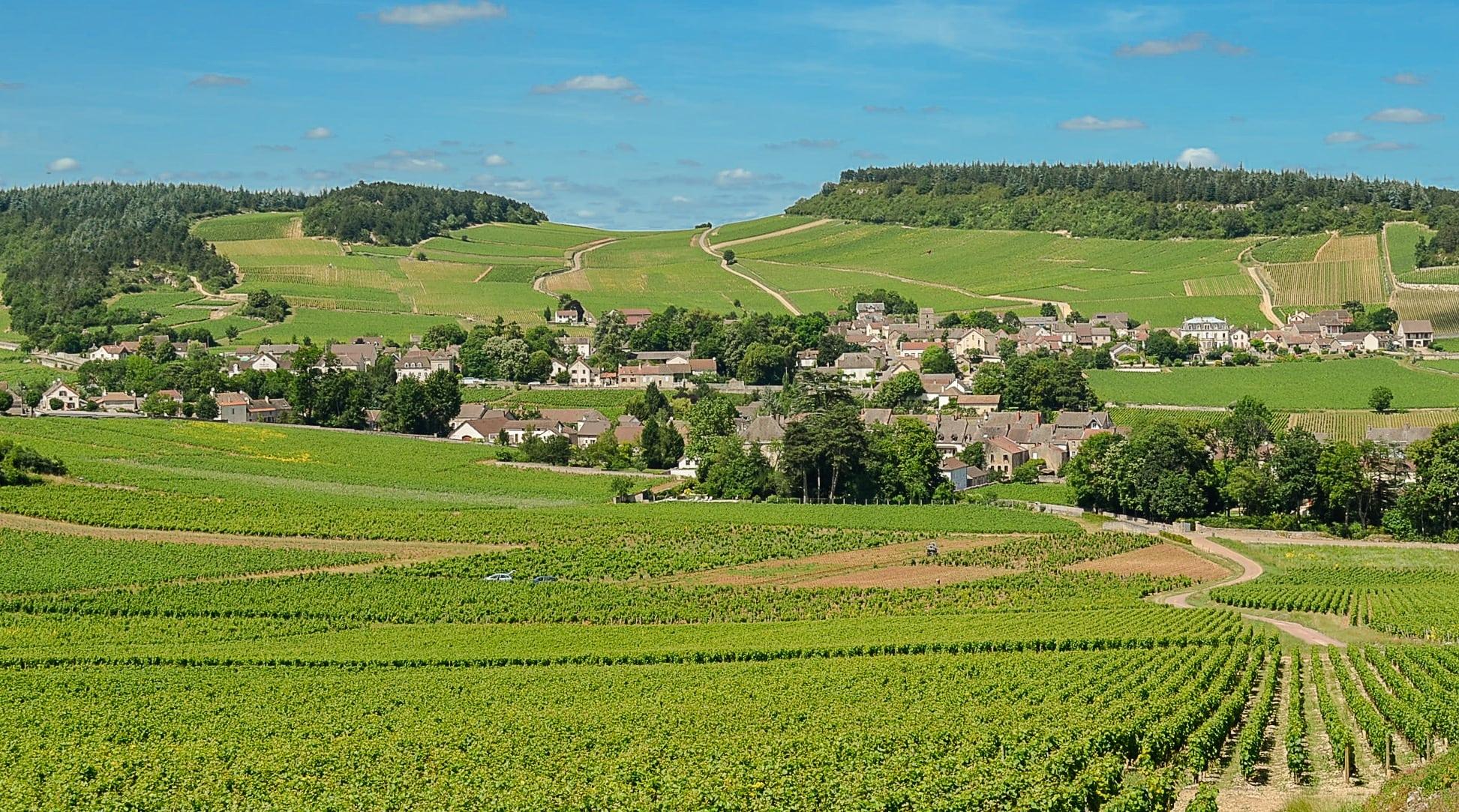 Les bourgognes sont partout en Bourgogne sauf dans la Nièvre