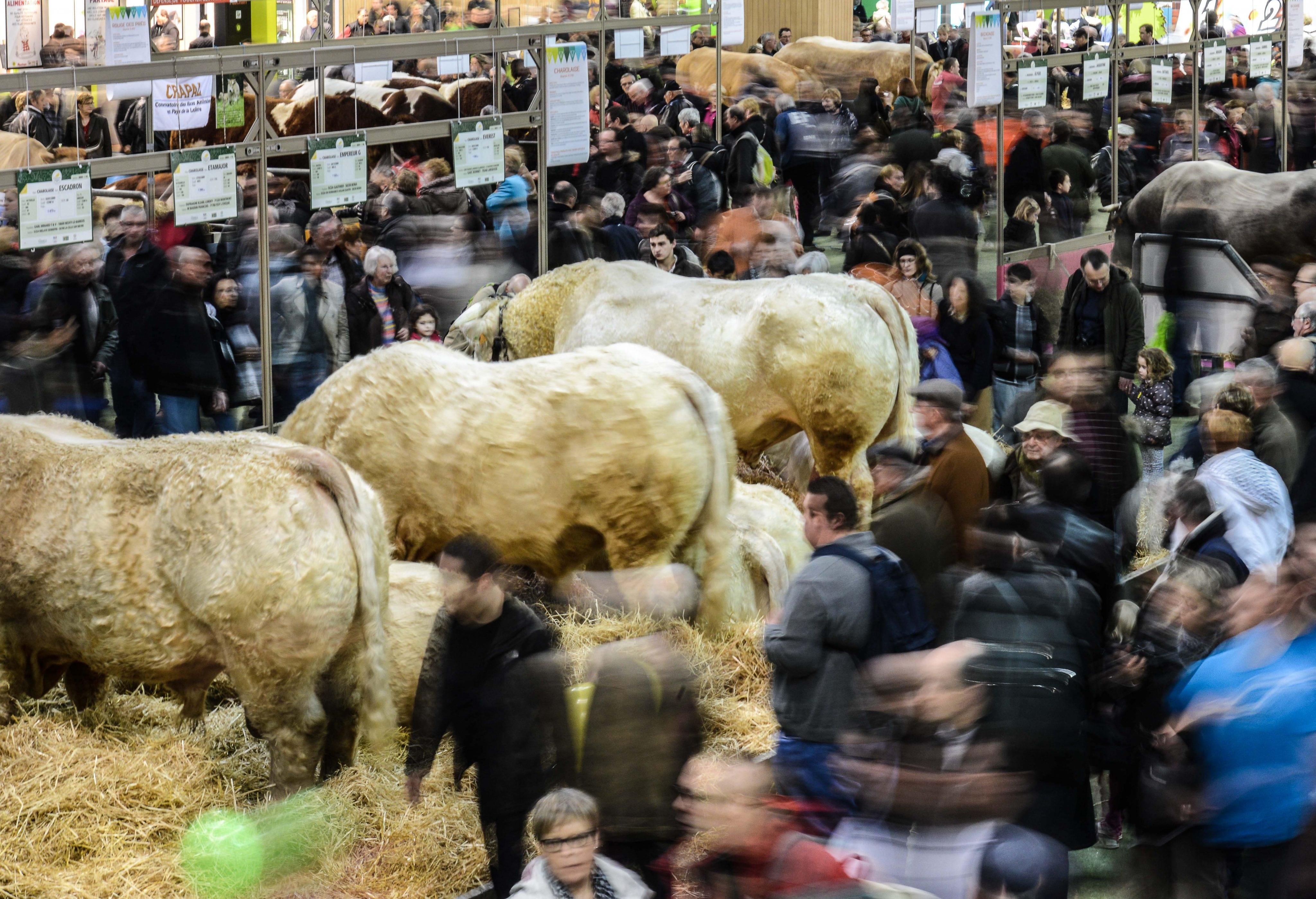 Sous le cul des vaches du 21 les combats du monde for Porte v salon de l agriculture
