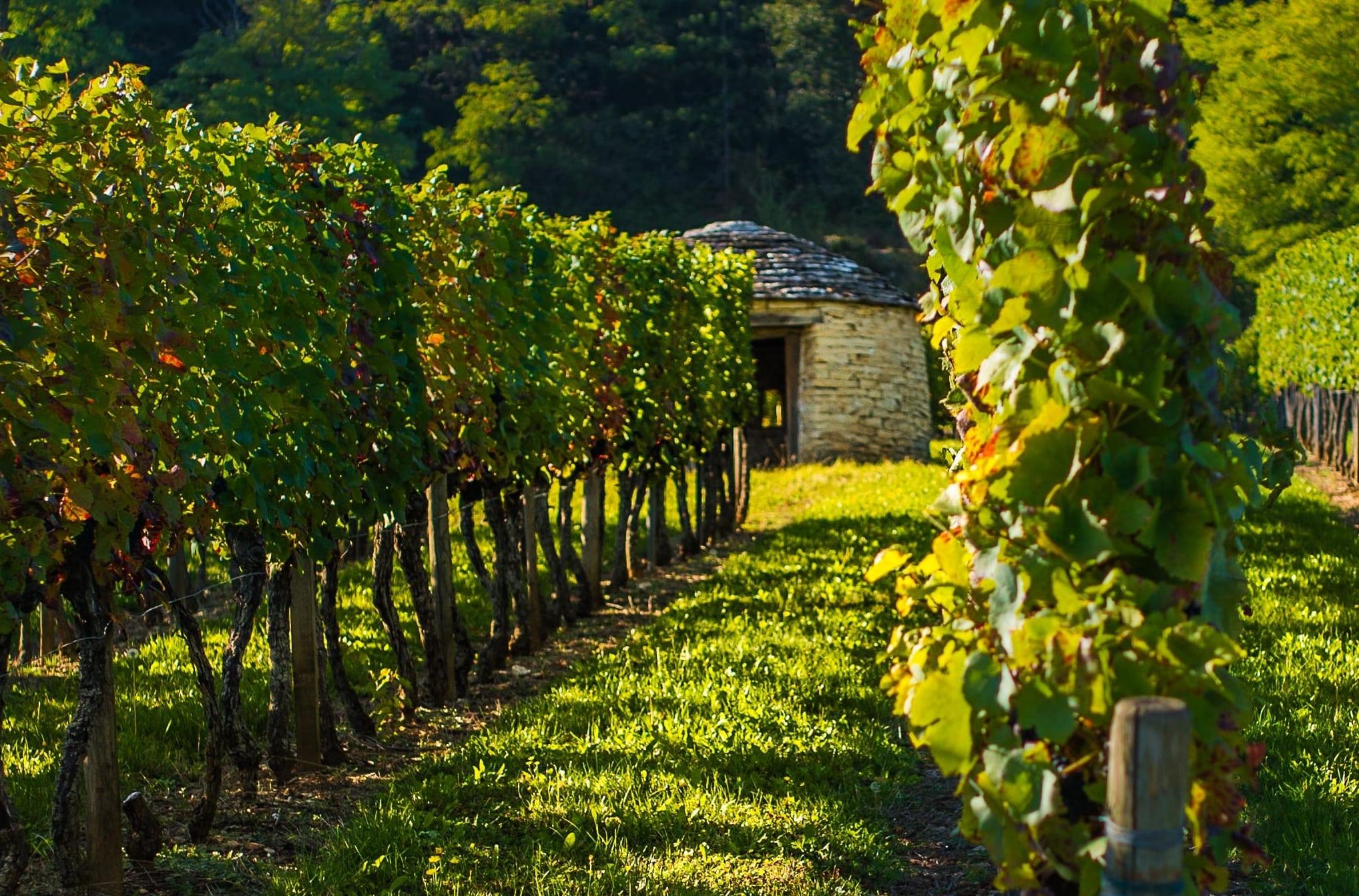 Pierres sèches en Bourgogne: le génie paysan à l'ouvrage