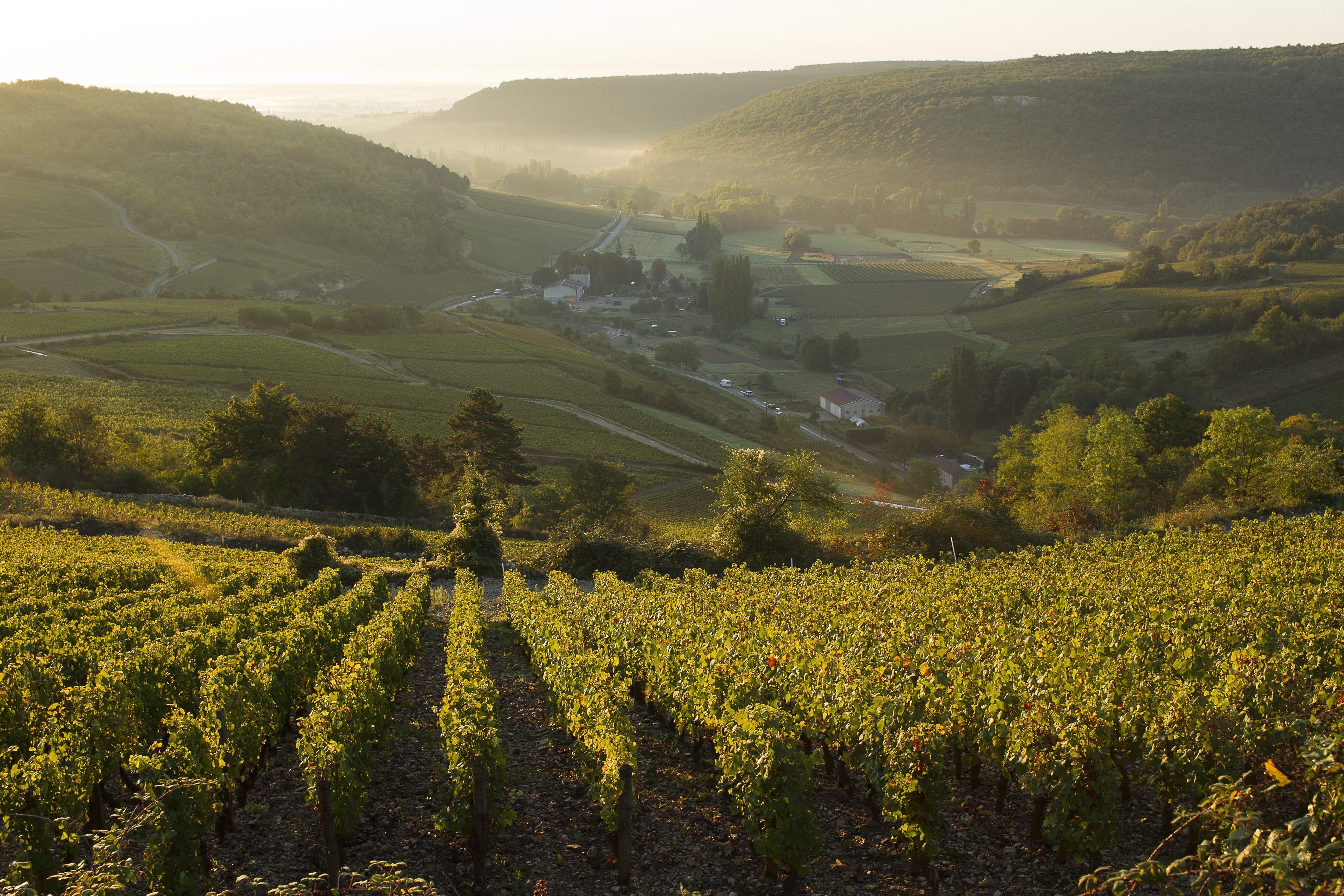 Millésime 2014, la vigne est au vert