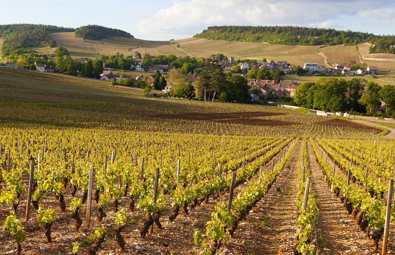 Hep sommelier! Complexe la Bourgogne?