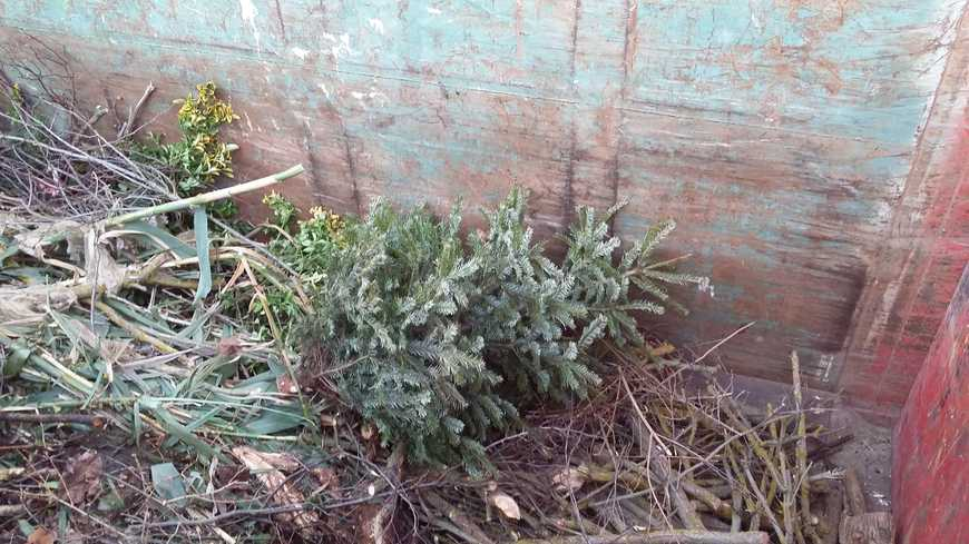 70 tonnes de sapins de Noël dans la hotte verte du Grand Dijon