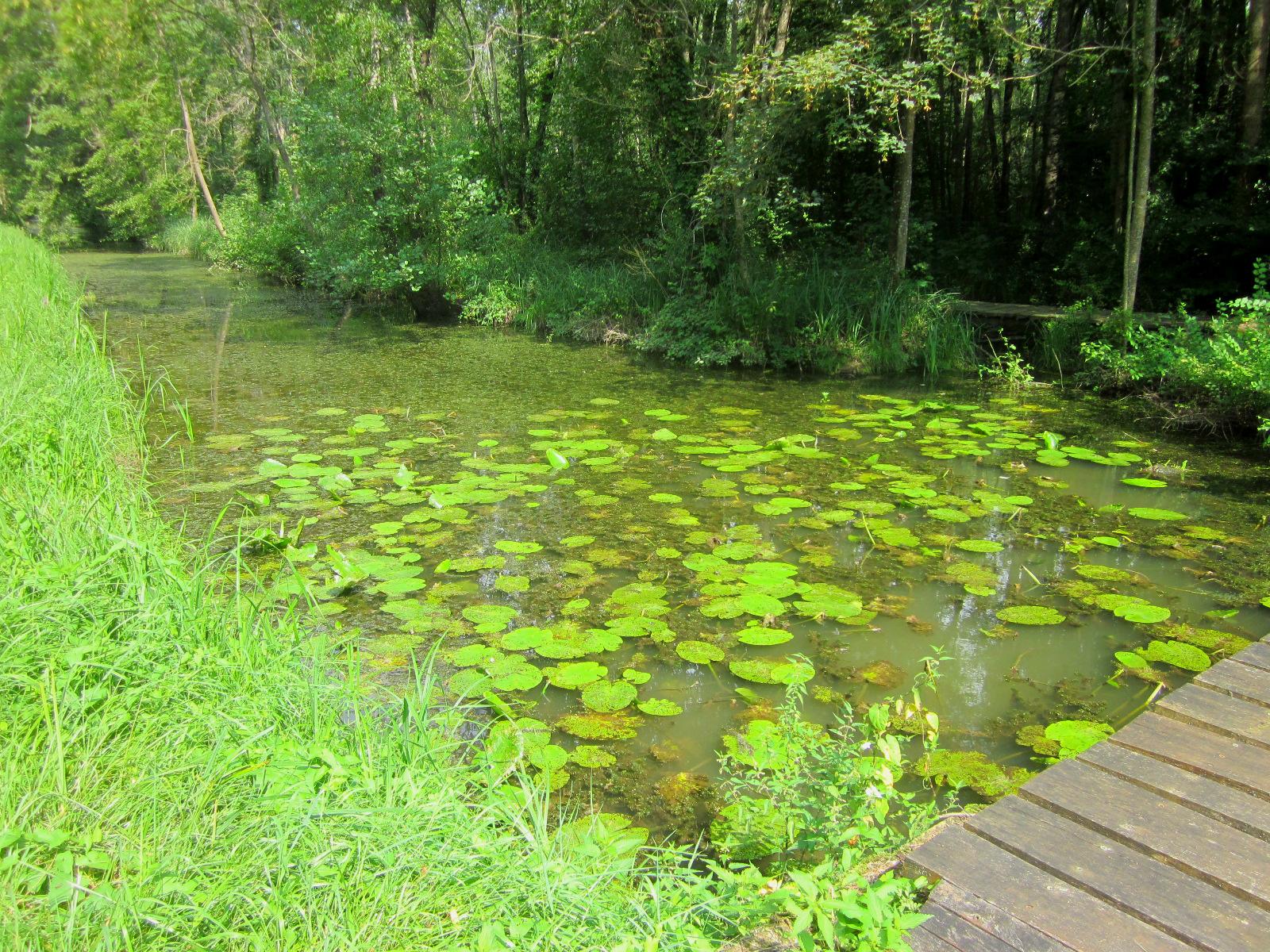 Mirebeau-sur-Bèze, marais naturellement sensible