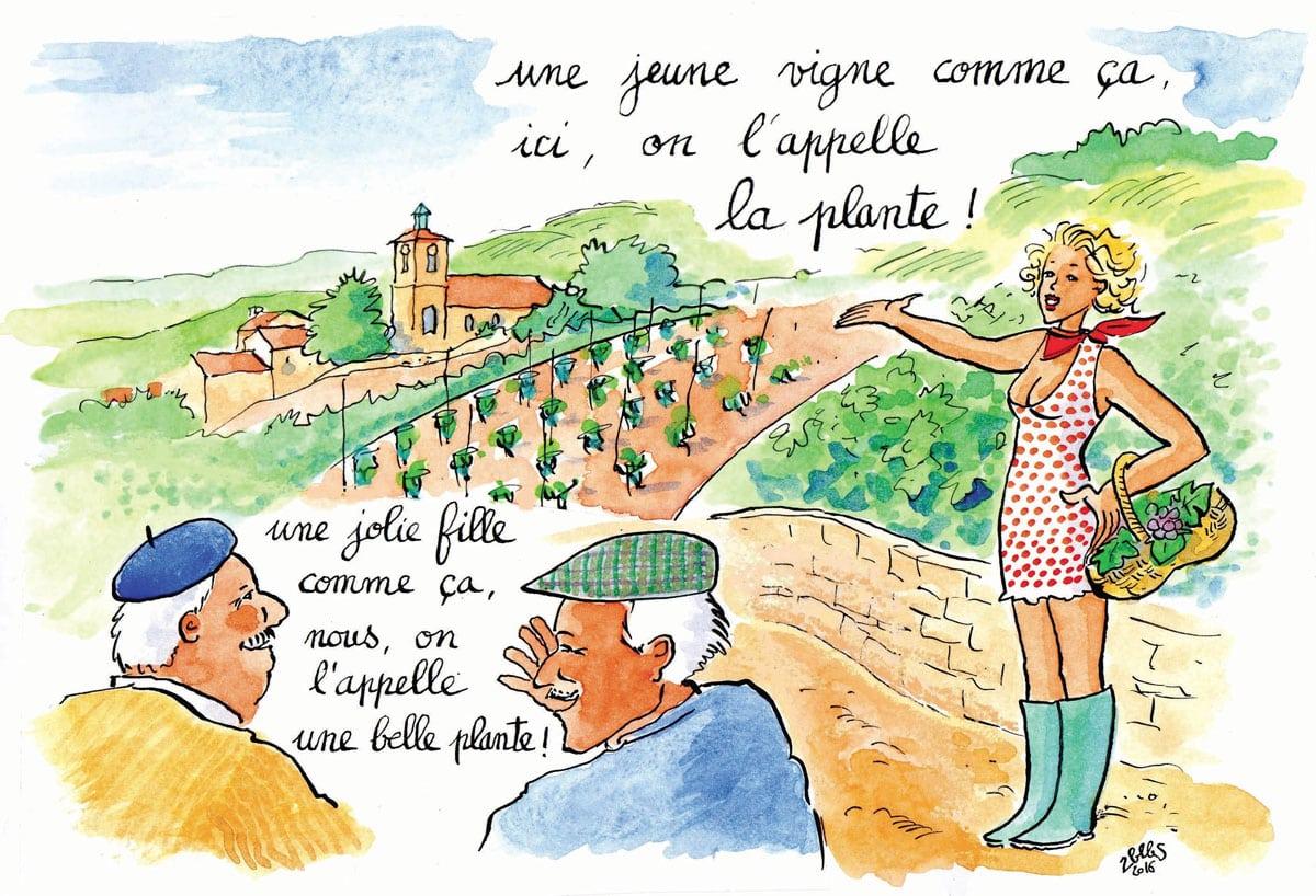 Climats en bouche, les vrais mots du terroir bourguignon