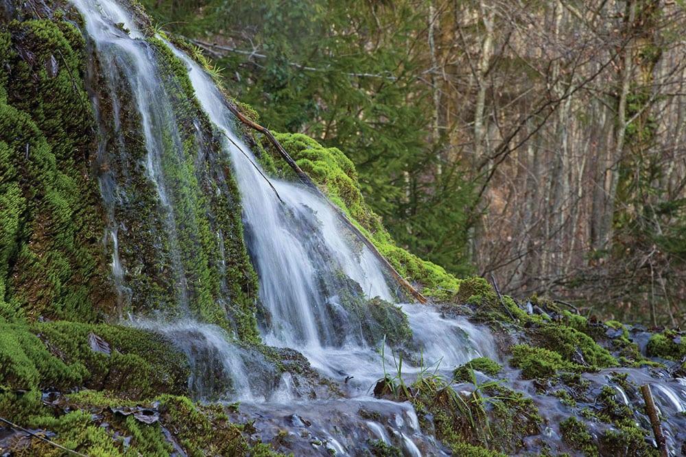 Le Parc national de Forêts (Bourgogne-Champagne) connait ses 54 décideurs