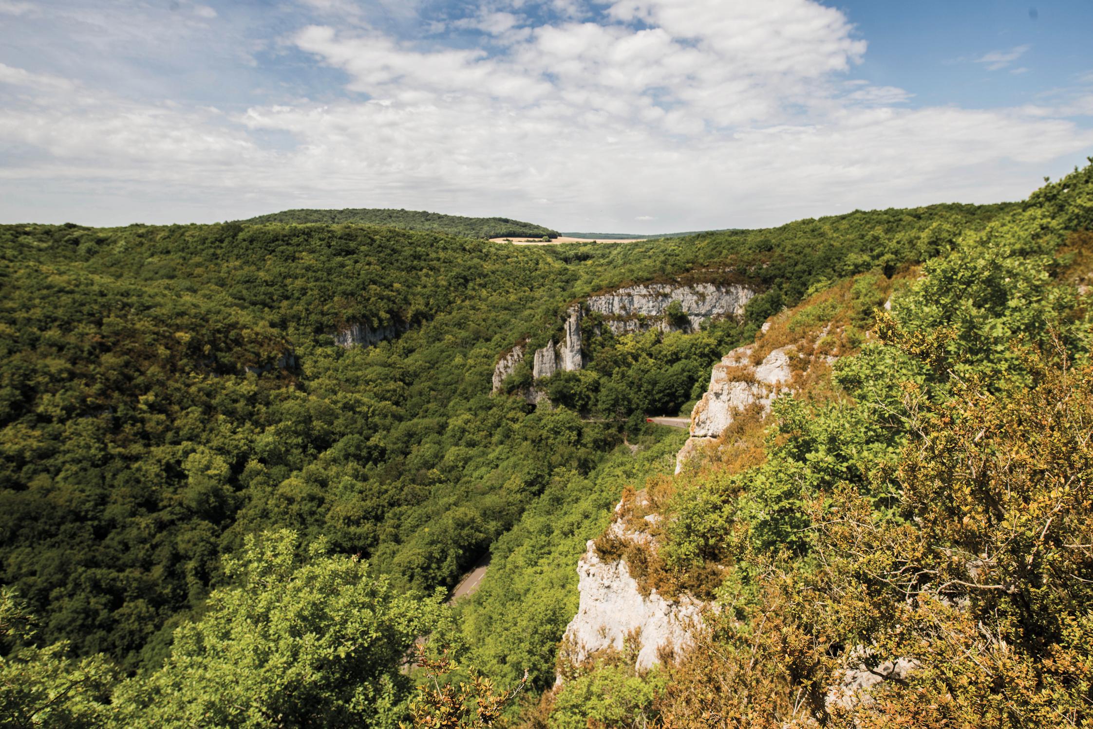 Combe Lavaux-Jean Roland : Gevrey-Chambertin entre nature et minéralité