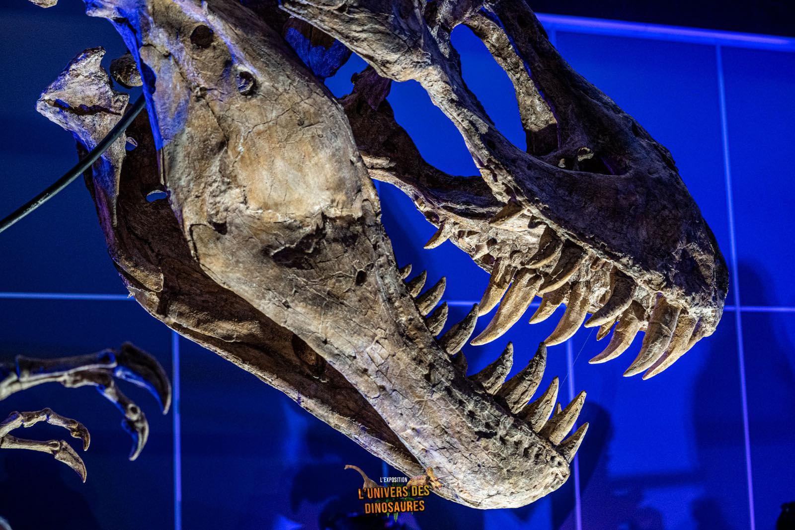 L'Univers des dinosaures débarque au parc des Expositions de Dijon