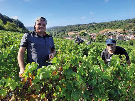 Pommard : les Papillons Blancs, pari gagnant pour la vigne du Département