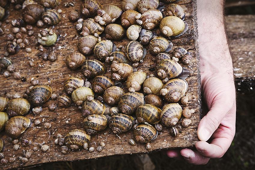 Frédéric Marcouyoux : éleveur-naisseur d'escargots, mais pas que