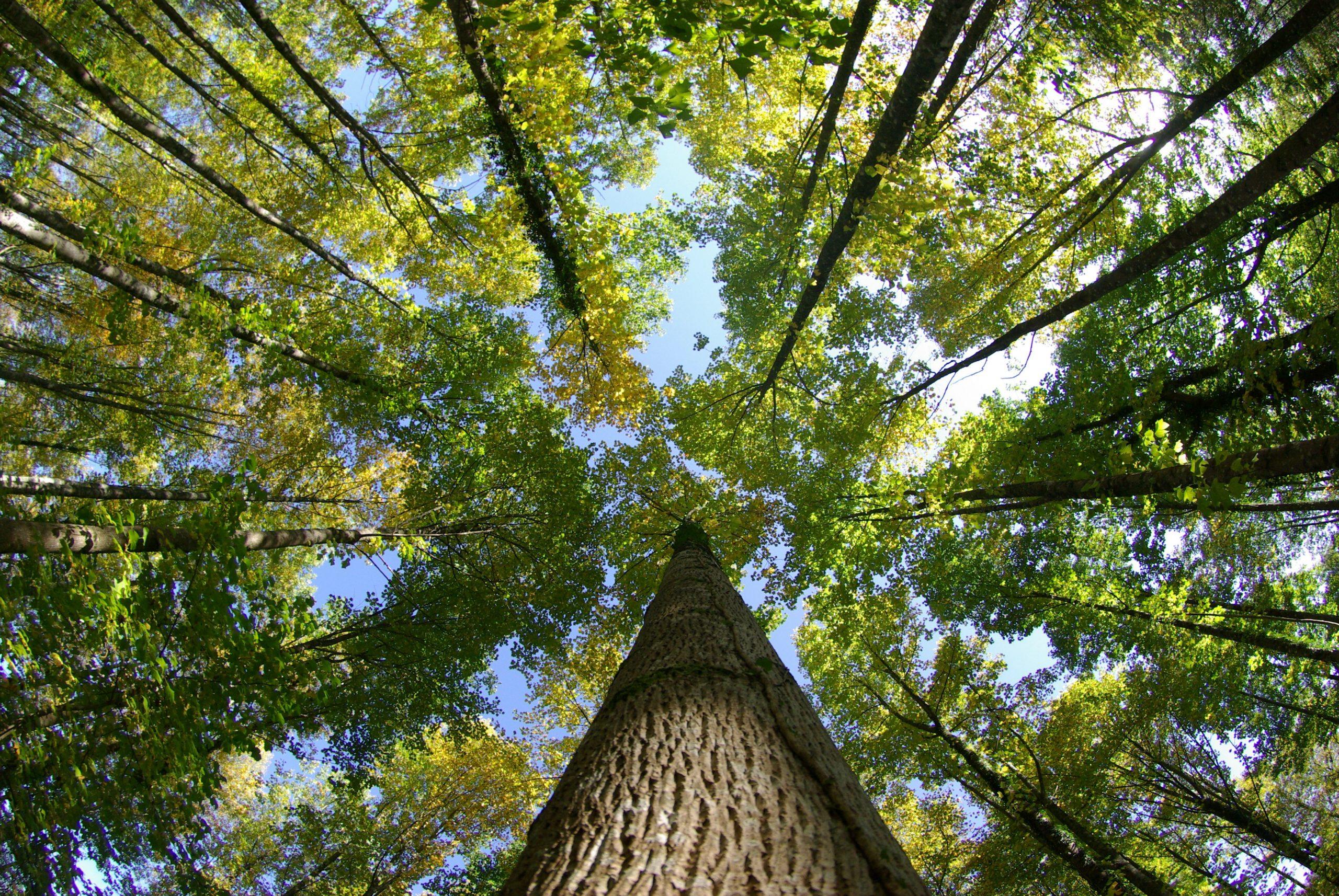 La Tonnellerie Rousseau replante des arbres en forêt des Bertranges