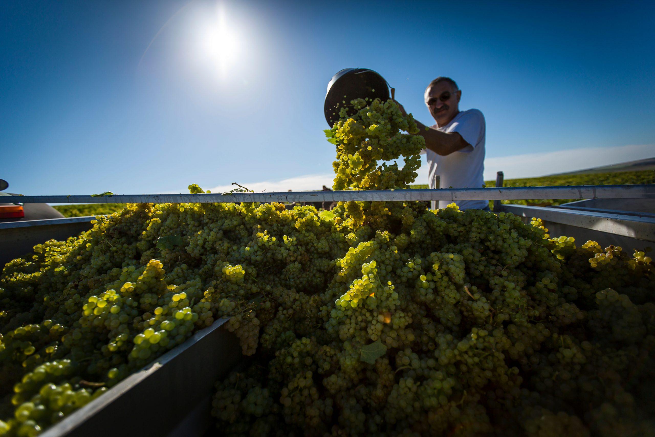 Vins de Bourgogne 2021 : Peu importe la quantité tant qu'on a la qualité